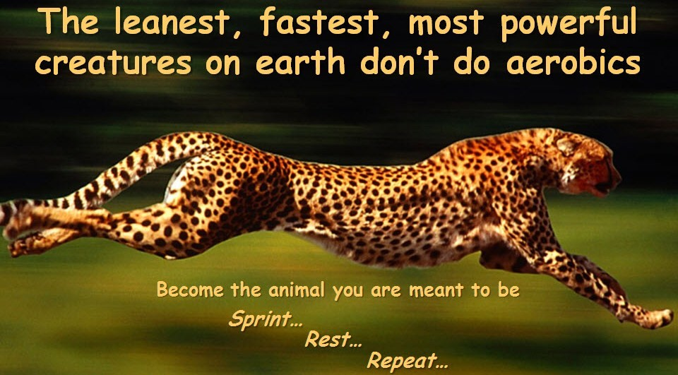 Les créatures les plus fines, rapides et puissantes sur Terre ne font pas d'aérobie