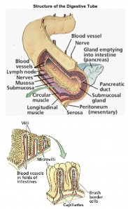 Villosité (Photo 1)